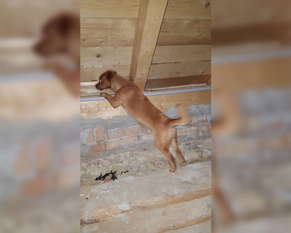 Der Wolf auf dem Dach