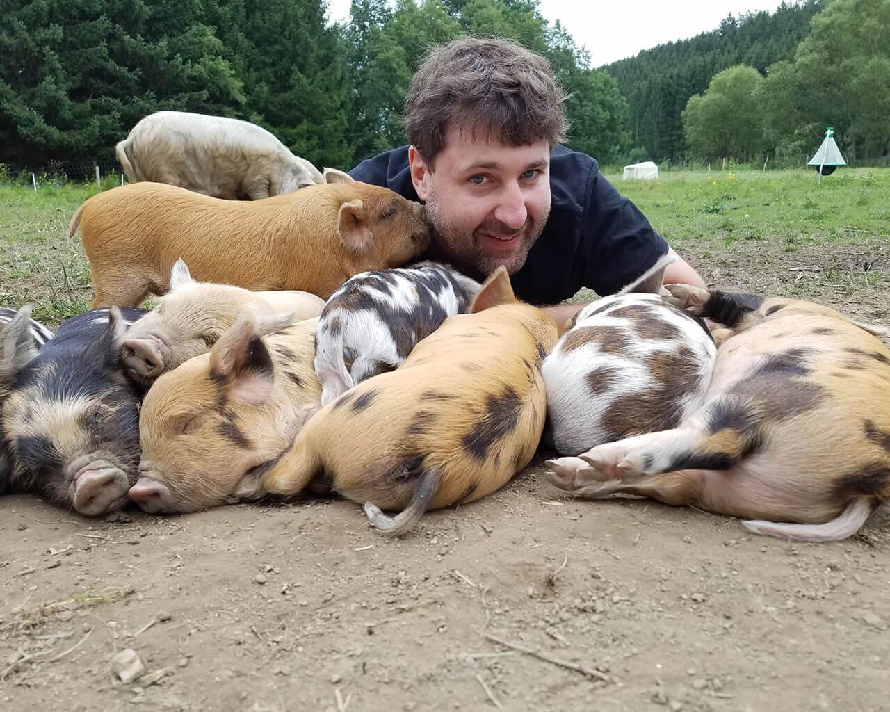 Kune Kune Ferkel beim Schweine streicheln