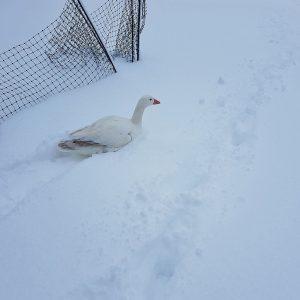 Hansi im Schnee